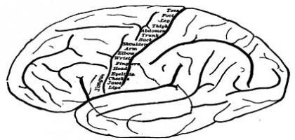 Neurony mají svá oblíbená čísla