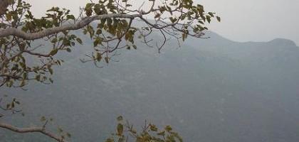Perlička: Proměny stromů