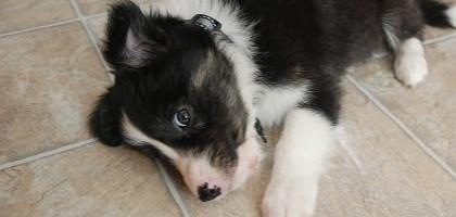 Magnetické pole a psi – pokus o vyjasnění