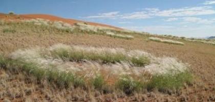 Rostoucí hladina CO2 způsobuje zelenání pouští